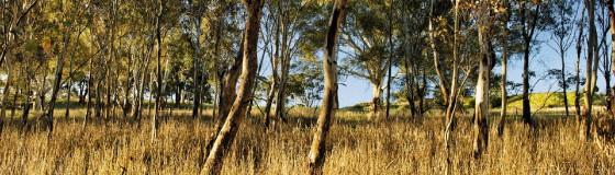 Blackwood-Park-_RLP4076_CMYK